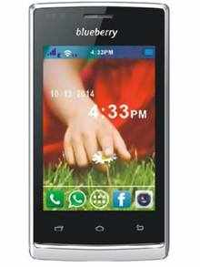 Blueberry S5.5