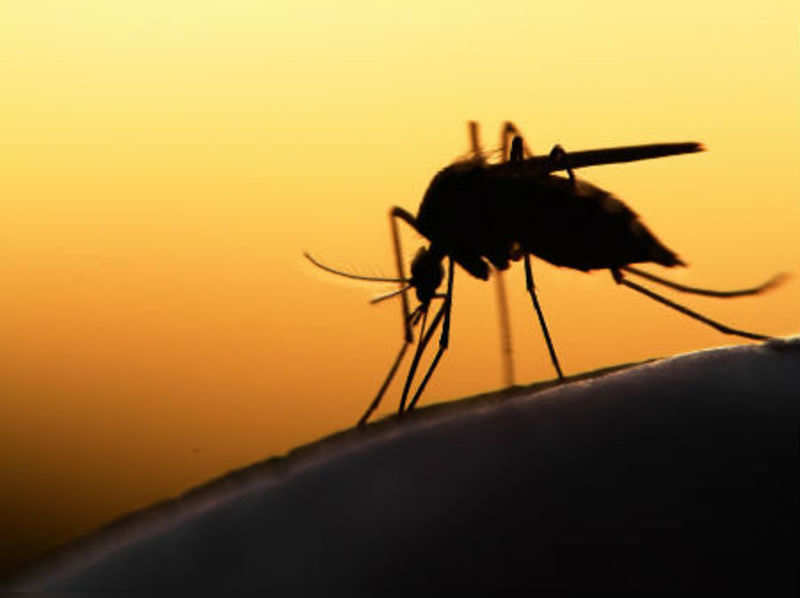 Chikungunya: Causes, symptoms and prevention