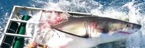 Man trapped in cage with shark says he feels reborn