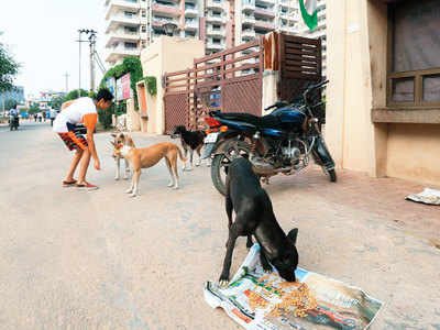Are strays a nuisance? Gurgaon regularly fights it out