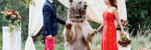 Bear marries Russian couple in a ceremony