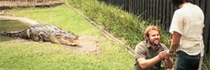 Brave reptile handler proposes to girlfriend while feeding crocodile