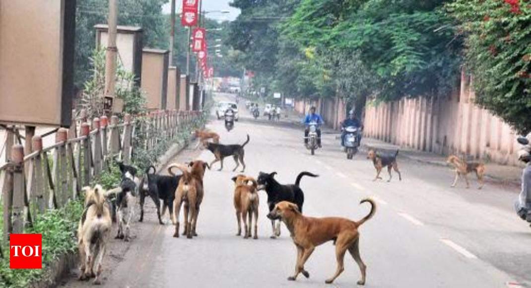Kanni And Kombai Dog Breeds To Be Reared At Dog Breeding Unit At