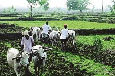 aquaponic farm: In a first, Gurugram farmers set up