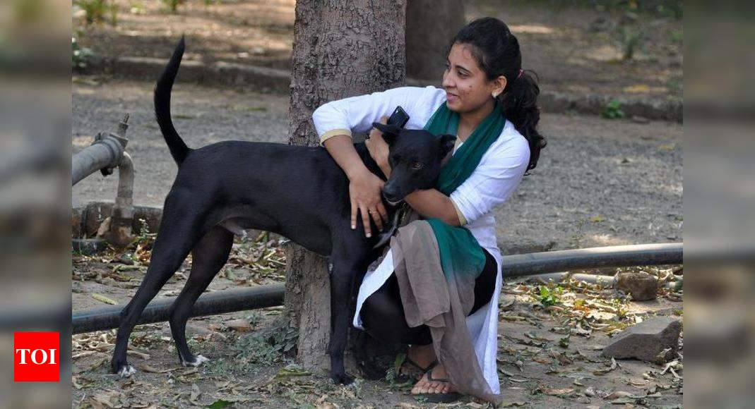 Stray Puppies Find Love Home At Adoption Camp Nagpur News Times Of India