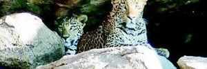 Leopard spotting scares tourists in Hampi