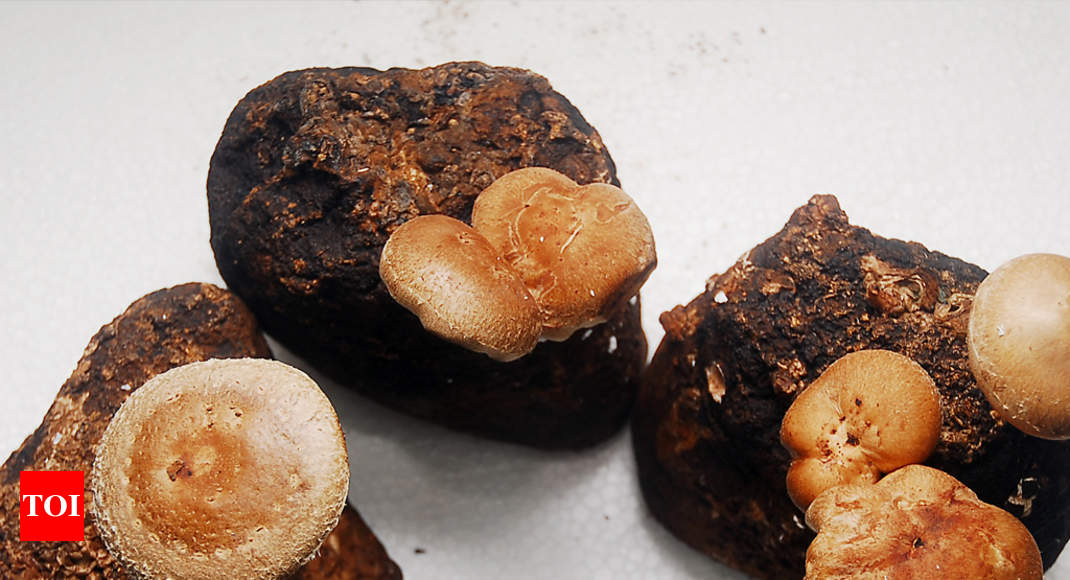 Periyar University: Training programme on mushroom cultivation