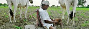 Shiv Sena warns Fadnavis govt on farmer suicides