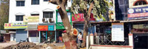 Transplant trees for those felled on NH-4, NGT orders MSRDC