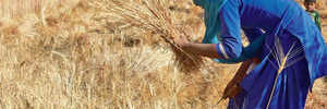 Let's discuss tax on farm income