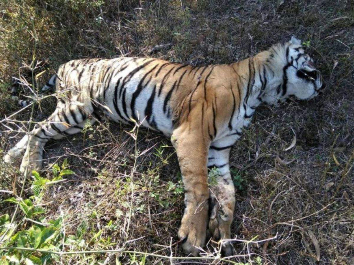 Human-Animal Strife, One Of The Greatest Threats To Wildlife: WWF And UNEP