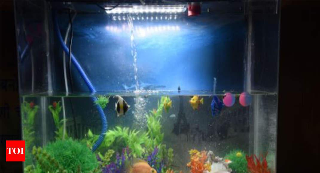 Mpeda Launches Subsidy Scheme For Aquarium Fish Breeding Units