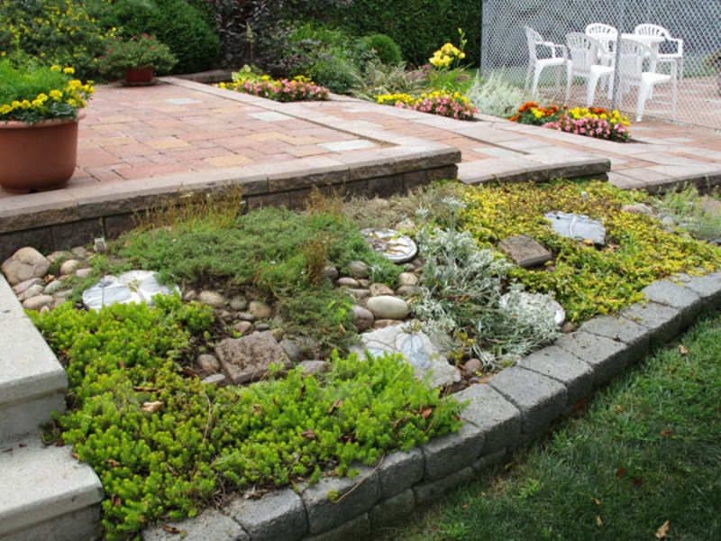 Create Your Own Rock Garden At Home Times Of India
