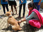 Vaccination drive for stray dogs