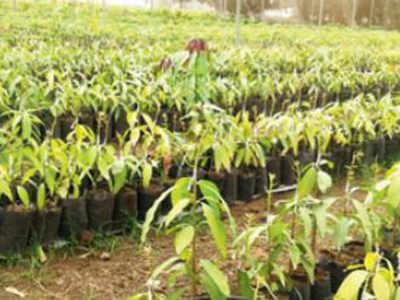 Kesar farmers to reap fruits of Israel technology | Ahmedabad News