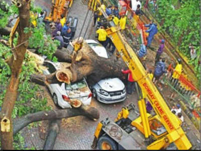 Death by tree fall: Can civic body be held liable for compensation