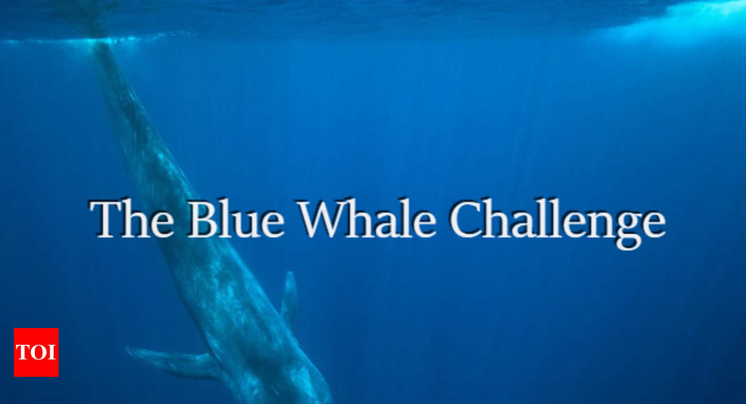 blue whale challenge blue whale game 5 facts about the deadly blue