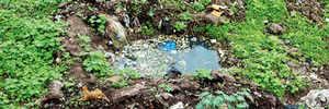 Viman Nagar under siege of vector-borne diseases