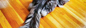 WORLD'S LONGEST CAT TAIL