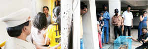 56 'hoarded' cats kept in deplorable conditions rescued