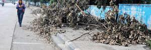 Fallen branches irk pedestrians in Baner