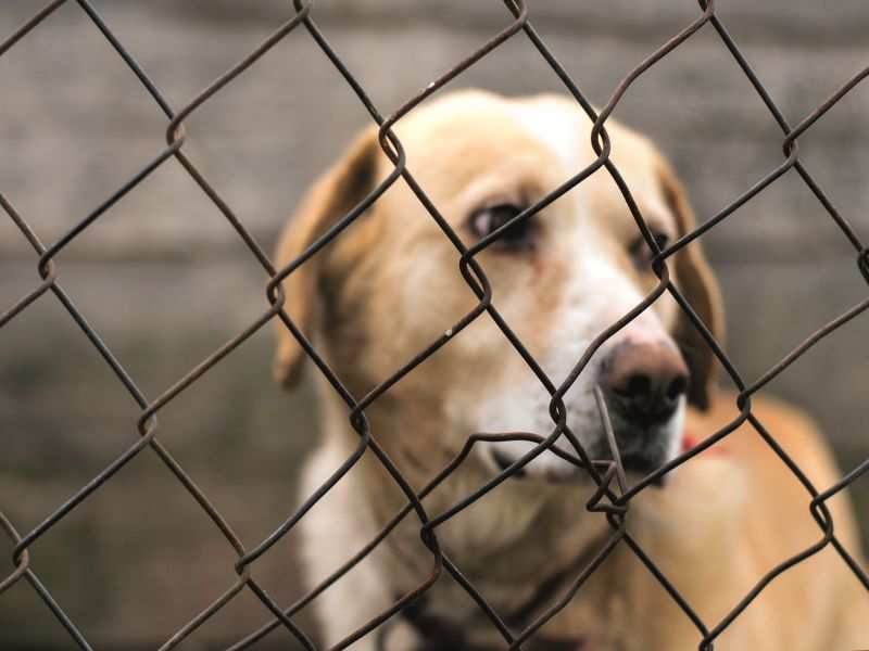 UK ups animal abuse punishment; in India, it's still Rs 50