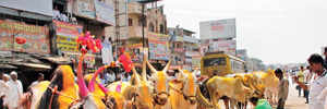 Protest held to revoke ban on bullock cart race ends up congesting Chakan
