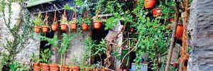 Starving butterflies get tailored garden