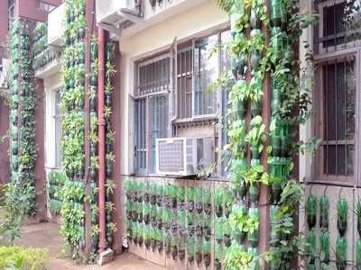 Vertical Garden At Ludhiana It Office Curbs Air Pollution Down By