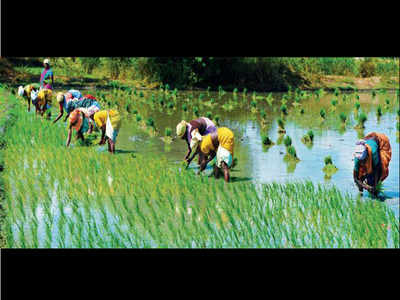 Tamil Nadu tops in enrolling non-loanee farmers under crop