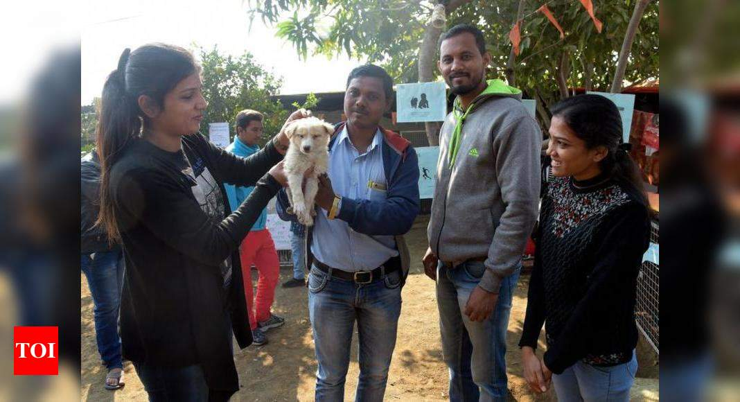 30 Stray Dogs Find Home At Adoption Camp Nagpur News Times Of India