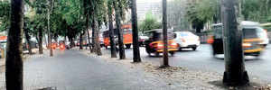 Conserved in 2015, 50 trees on Nagar Road now set to be felled