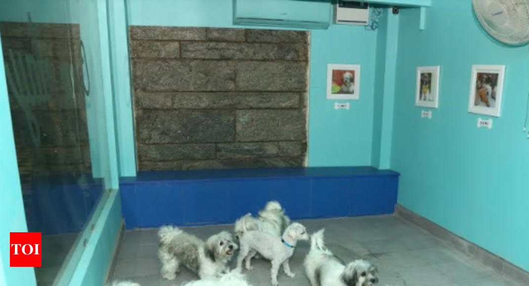 Twisty Tales Pets Pet Owners Can Now Dine Out Together In Chennai
