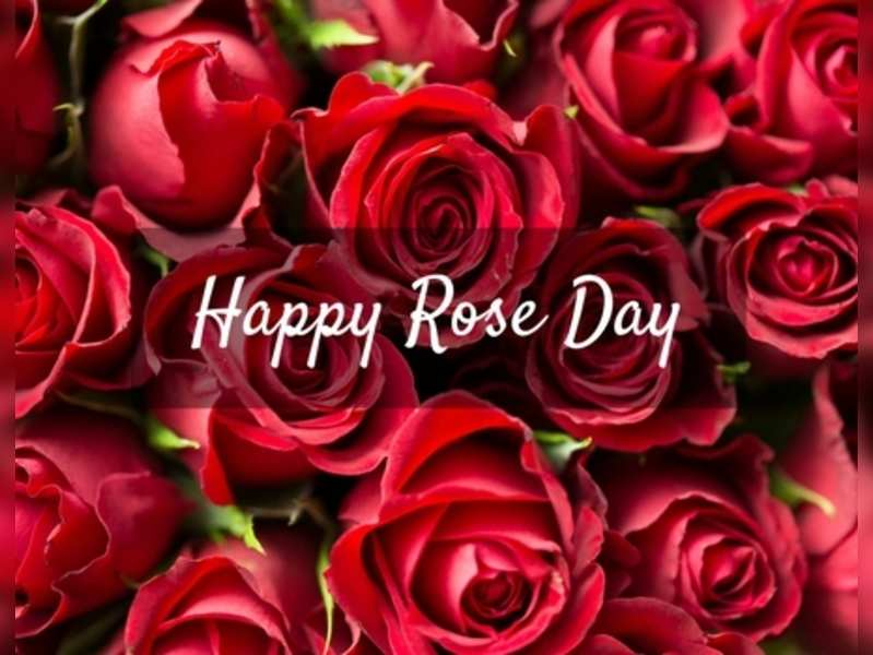 Happy Rose Day 2018 Wishes Love Quotes Sms Es Whatsapp Status Gif S Images