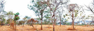 PMC faces legal threat for trees in way of Metro