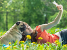 Touchscreen games may boost brain skills of pet dogs