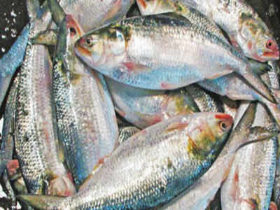 fish price list in hyderabad