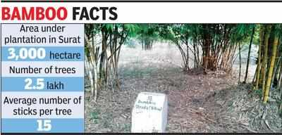 bamboo plantation: Bamboo cultivation gaining ground in