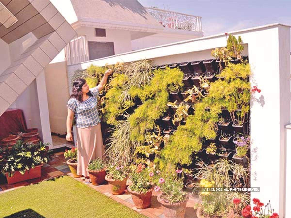 Bareilly Once A Wall Now A Vertical Garden Bareilly S Latest Trend Bareilly News Times Of India