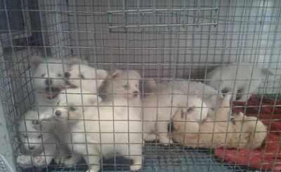 Maharashtra: Maharashtra govt plans stricter law, illegal pet shops