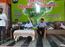 A step towards organic farming in Kolhapur