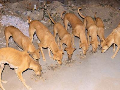 Gujarat: This Gujarat village is full of 'crorepati' canines