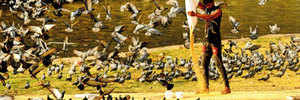 PMC GIVES CITY A RESPITE FROM PIGEON HELL