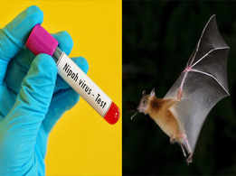 Protect yourself from the deadly Nipah Virus