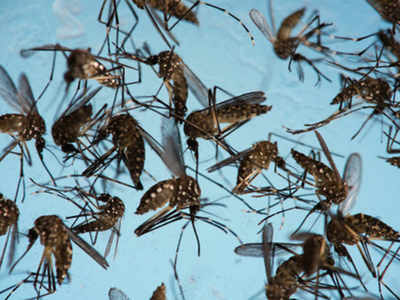 outbreak of dengue: 'Dengue under control in Kamrup-M