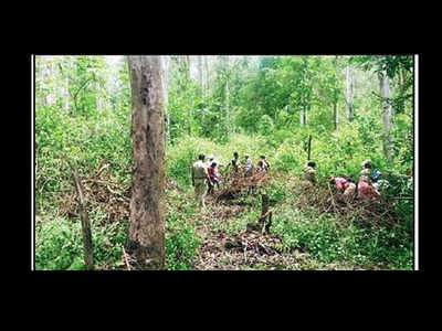 Asia Pacific Forest Invasive Plant Species Spread Over 10 Hectares