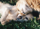 Cheers! Food habits of cats and dogs decoded