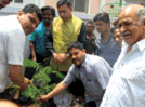 Citizens of Aurangabad planted trees on World Environment Day