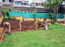Firemen turn garbage dumping ground into garden in Kolhapur