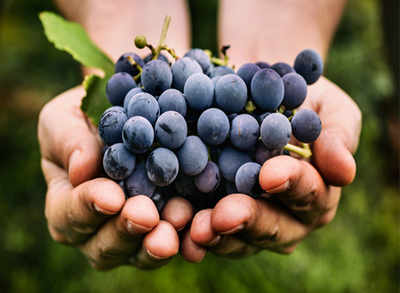 What are black grapes? Their health benefits, origin and recipes